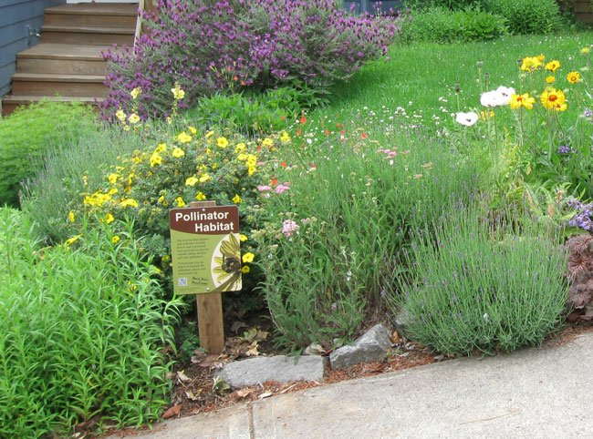 Pollinator garden replaces a portion of this suburban lawn.